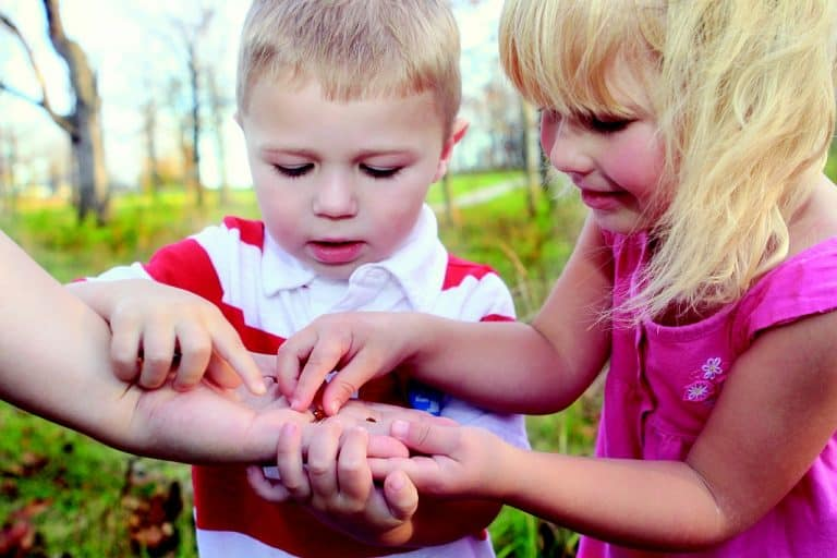 Early Childhood Education teaching children about nature and ladybugs